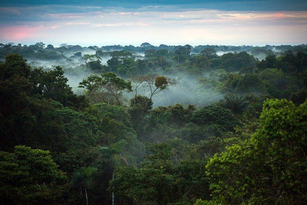 Amazônia: monumento verde