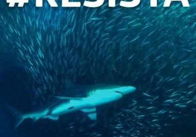 Resistir é preciso!