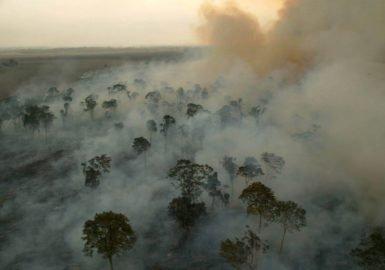 Reduzir o desmatamento rende bilhões