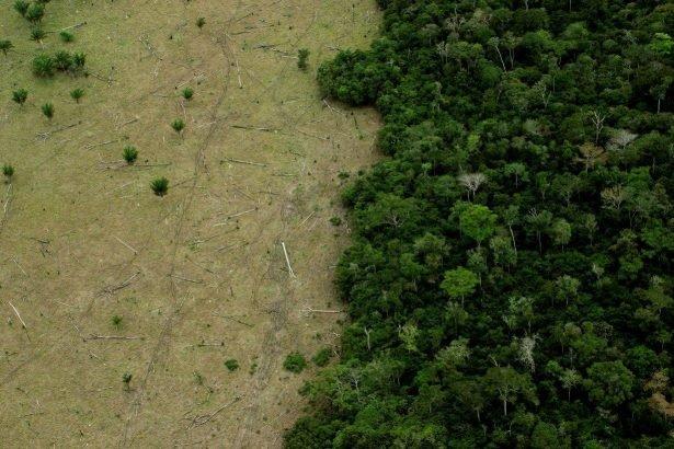 MP da Grilagem - devastação - deforestation