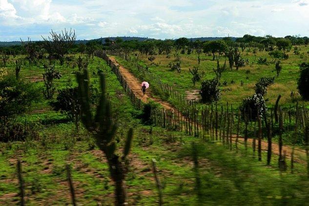 Sertão de Guimarães Rosa - bushlands