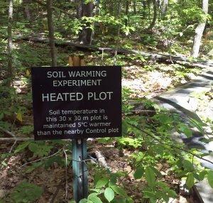Floresta de Harvard - carbono - forest soil carbon