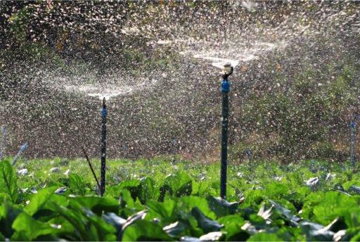 Irrigação, Carbono, CO2