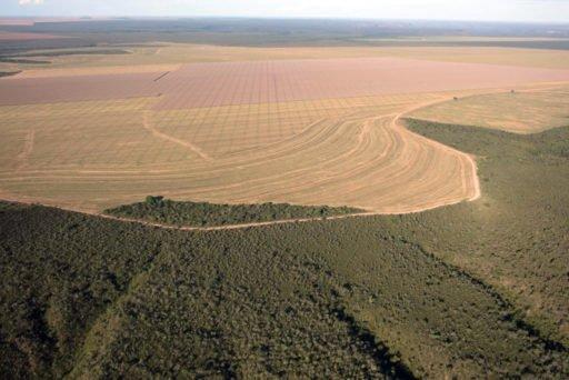 Desmatamento Cerrado, savannah