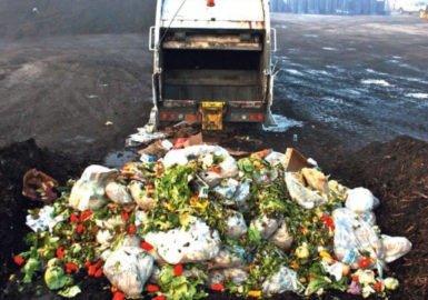 Desmatamento x Desperdício