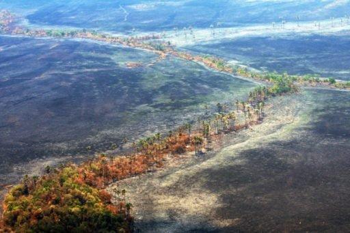 Devastação do Cerrado