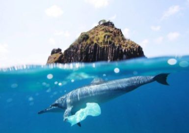 Abrolhos e Noronha têm lixo do mundo todo