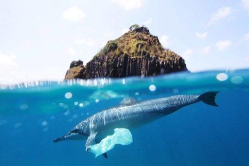 Lixo marinho, trash