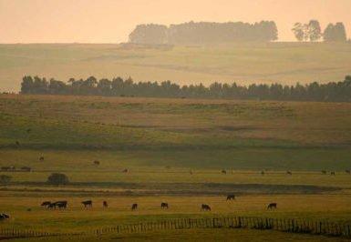 Pampa é para criar gado