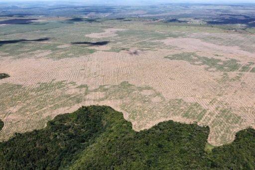 Redução do desmatamento superfaturada, Deforestation exaggerated