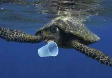 Plásticos entram na dieta das tartarugas