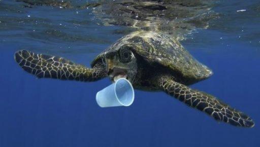 Tartarugas comem plásticos